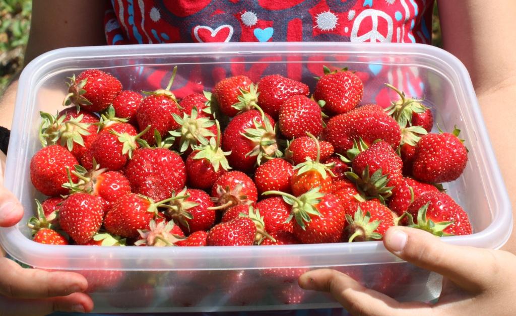 June 22, 2014 045 crop